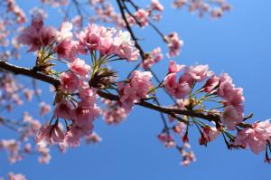 03桜03w